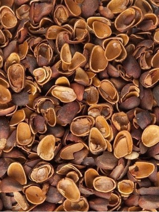 Ореховая скорлупа